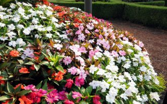 Collection Of Flowers That Like Shade With Colorful Color