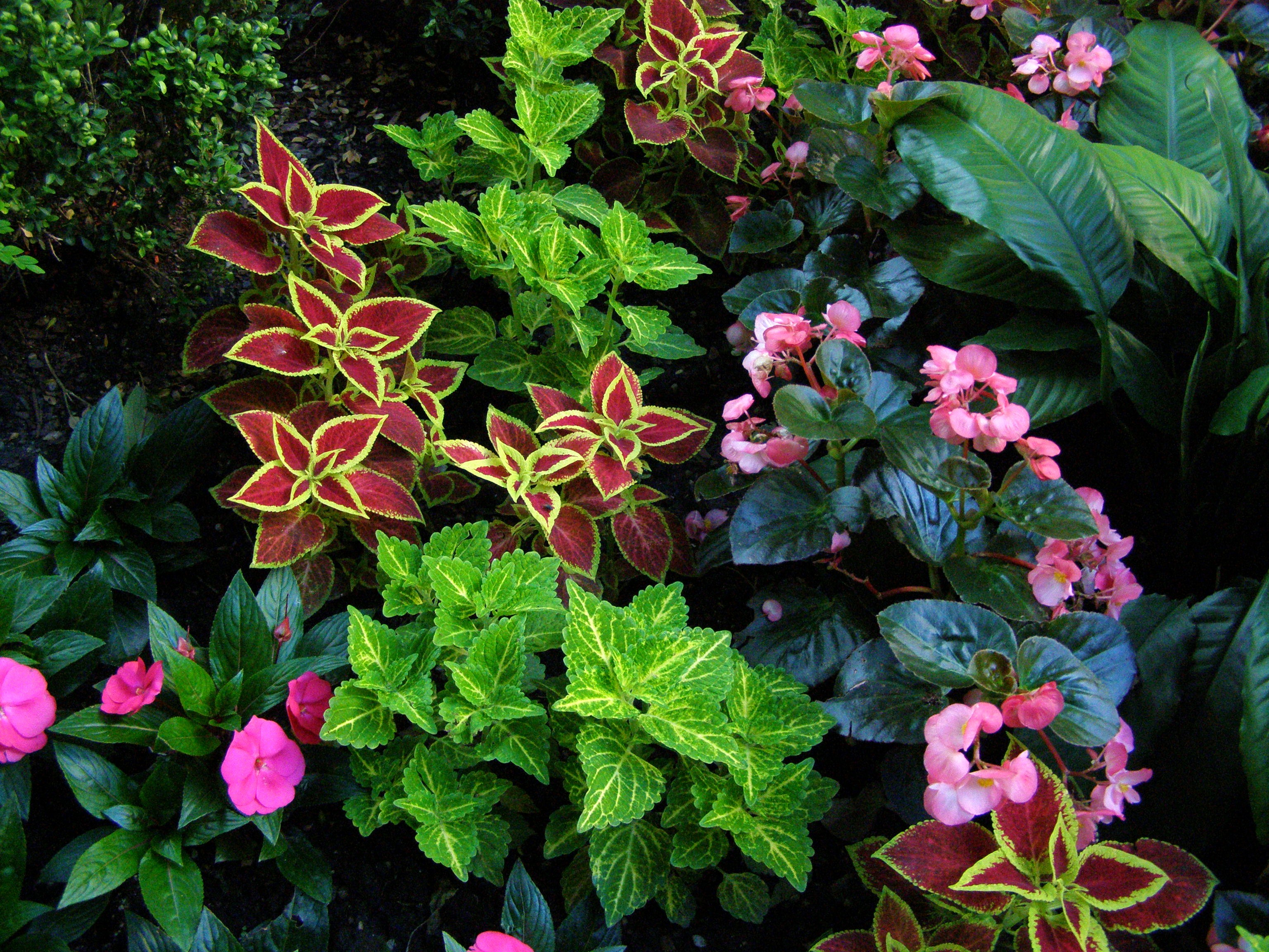 natural perennial plants for shade homesfeed