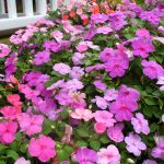 Colorful Of Flowers That Like Shade For Home Exterior