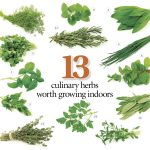 Culinary Herbs For Growing Indoor Kitchen