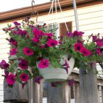 Flowers That Like Shade On Hanging Pot