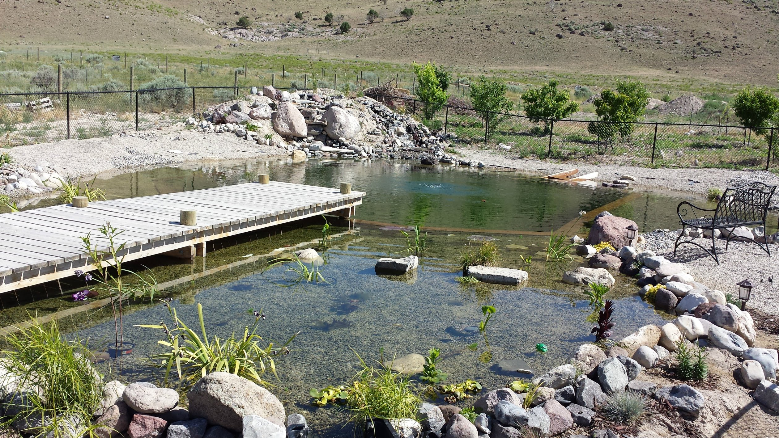 Tips to build your diy natural swimming pools homesfeed Natural swimming pool builders