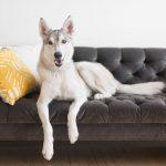Dark schemed couch for dog