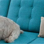 Friendly couch for dog