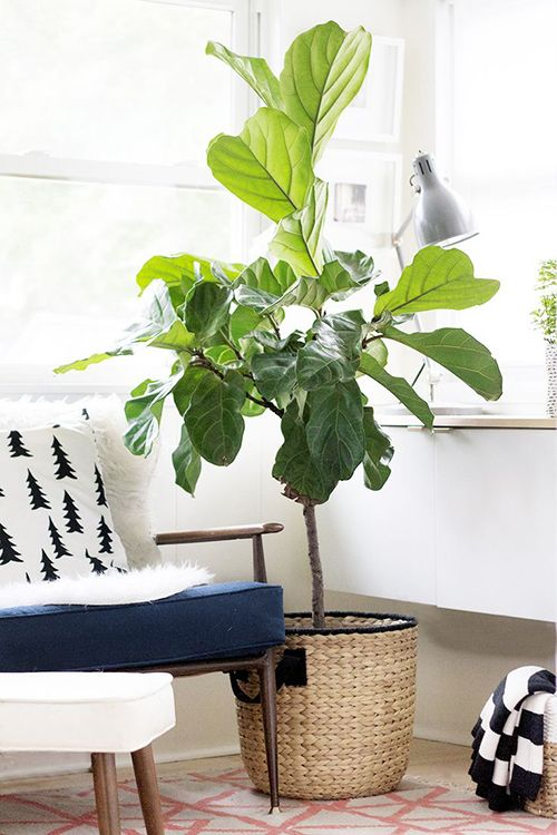 seating nook corner chair with pine tree prints modern vintage area rug houseplant with big leaves and natural fiber basket planter