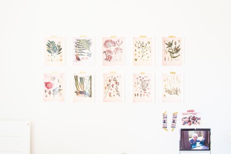 framed plant wall decors idea