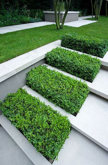 modern landscaping idea with green beds on concrete outdoor stairs