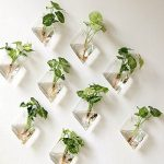 Mini Glass Terrariums Hanging On Walls