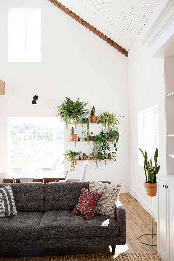 a cluster of greenery on clay burnt pots wood floors white walls modern gray sofa with tufted upholstery colored throw pillows