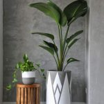 Bare Concrete Wall Concrete Planters In Different Size Wood Stool
