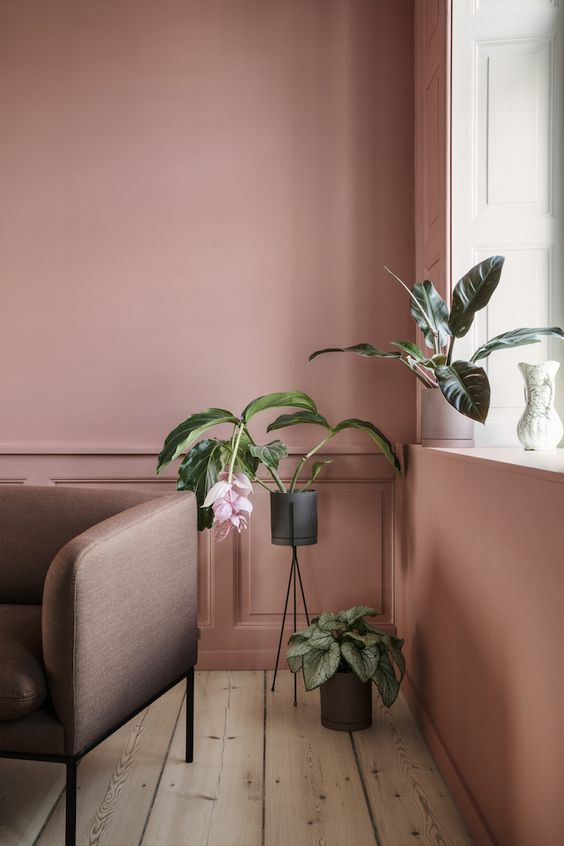 earthy pink walls darker pink sofa vivid indoor plants on pots