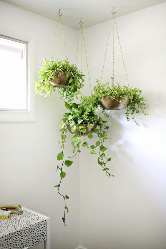 hanging indoor garden idea three units of brass hanging planters with brass chain ropes
