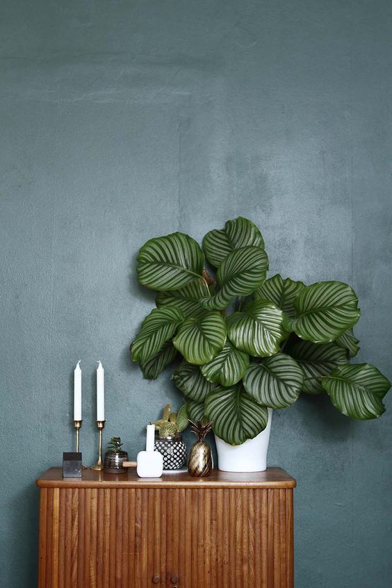 stunning greenery with white pot bamboo console table with textured door panel dark blue wall