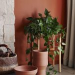 Terracotta Wall Idea Terracotta Colored Vases Low Profile Houseplant With Wood Stand Stoned Walls Ornate Basket