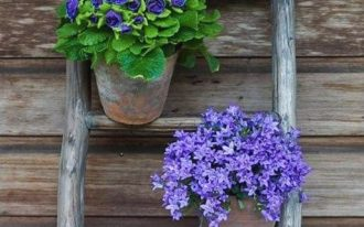 vertical garden made of worn out ladder and some potted flowers