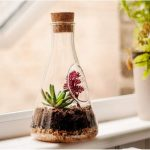 Chemistry Glass Terrarium For The Windows