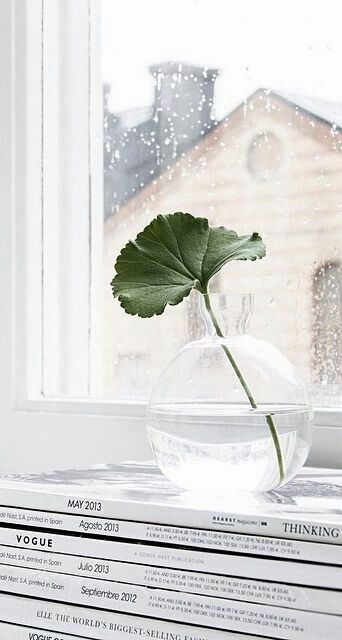 single leaf greenery in clear glass planter for window ornament