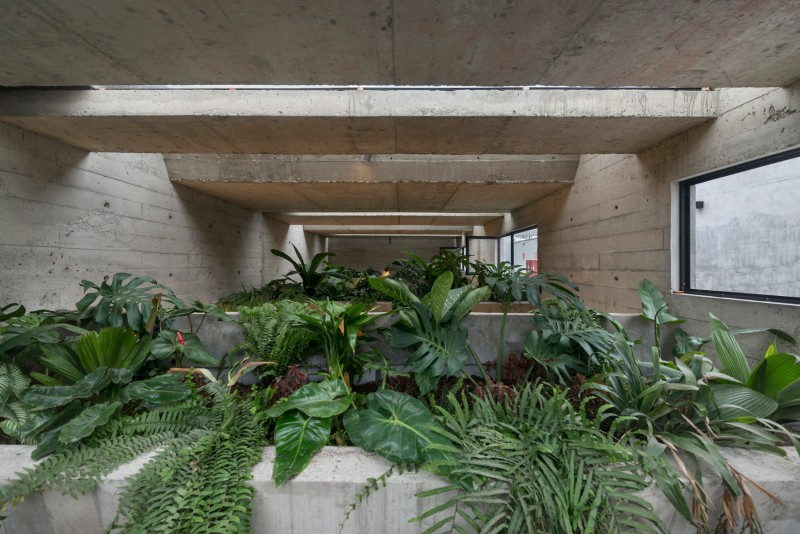 rain forest inspired garden with large concrete planters on top