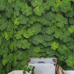 Green Leaves Wallpaper In Natural Green