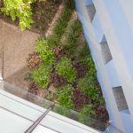 beautiful garden look from the roof