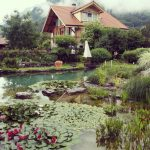 floating plants green environment wooden house stone footpath foggy mountain view beautiful natural swimming pool