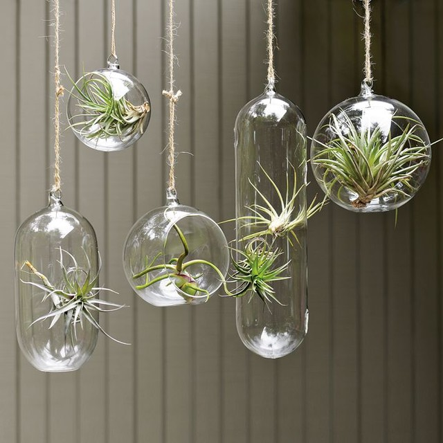 Beautiful Plant Ornaments In Various Hanging Clear Gl Pots Shapes Haging Indoor Plants