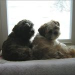 large-simple-nice-adorable-cool-wonderful-dog-window-perch-with-nice-soft-amterial-cover-with-white-accent-design-for-modern-home
