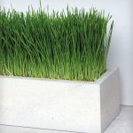 permanent concrete planter box with ornamental grass plants