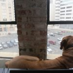 wonderful-simple-nice-adorable-cool-awesome-dog-window-perch-with-large-design-and-nice-for-dog-stand-and-see-the-view-from-window-728x546