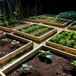 a group of wood boxes as media to plant vegetables