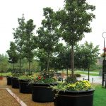 black plastic tree planters