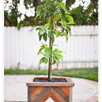 creative-simple-nice-adorable-great-wood-planter-box-with-small-wooden-concept-design-with-small-tree-for-garden-design