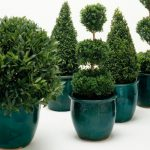 fantastic-cool-green-fresh-nice-adorable-plants-with-nice-indoor-tree-planter-box-in-green-made-of-plastic-design-and-has-nice-design-for-home