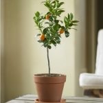 wonderful-nice-cool-fresh-orange-tree-fresh-design-indoor-tree-planter-box-with-traditional-indoor-pots-and-planters-made-of-plastic-