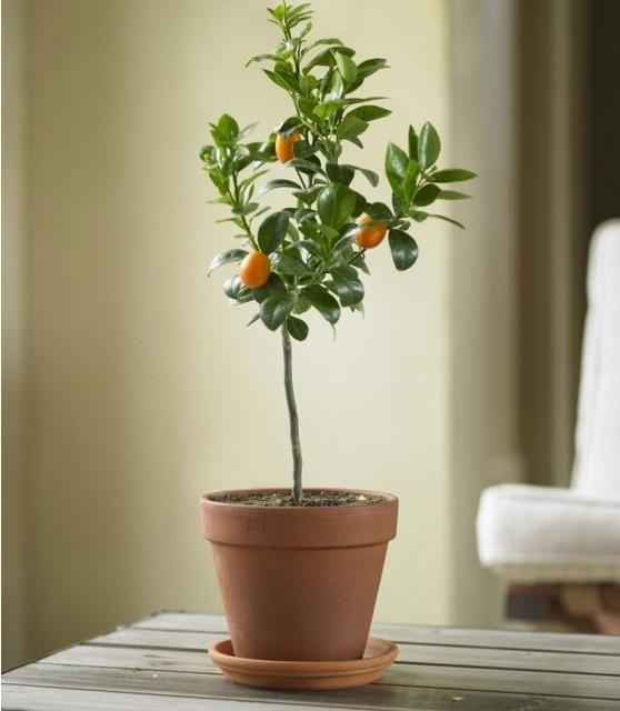 Wonderful Nice Cool Fresh Orange Tree Design