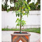 wood tree planter box with multi color strips
