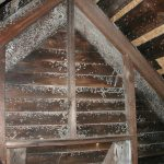 dull mold in attic on wooden attic ceiling