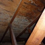 mold in attic in wooden attic ceiling