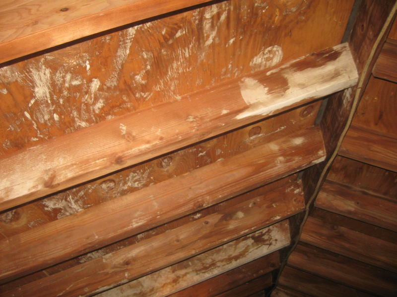 Molds In Attic And How To Resolve Them Homesfeed