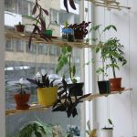 simple awesome indoor plant shelves with cane wire shelves for various color post with several plants beneath glass window aside white wall