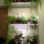 stunning indoor wall plant shelves idea with three levels model on white wall aside brown wooden wall accent with various plant
