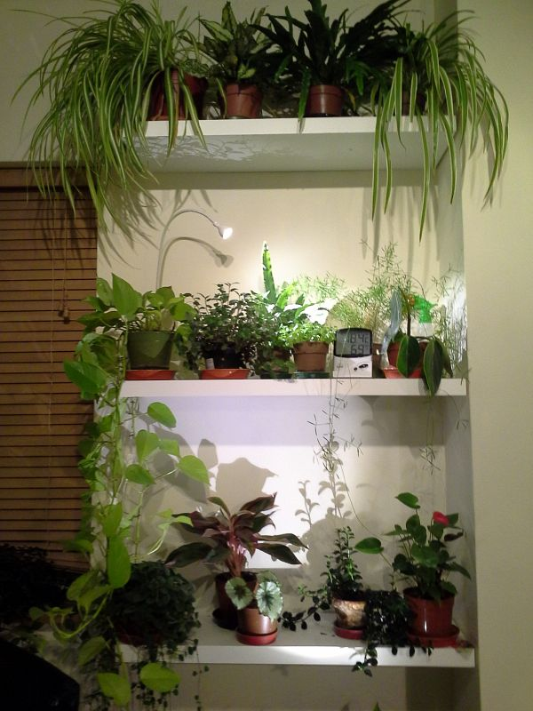 Plant Bookshelf Living Room