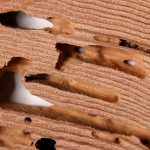 termites in furniture surface 3