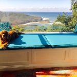 dog window perch with wooden bench with blue bed and cushions aside with large glass windows