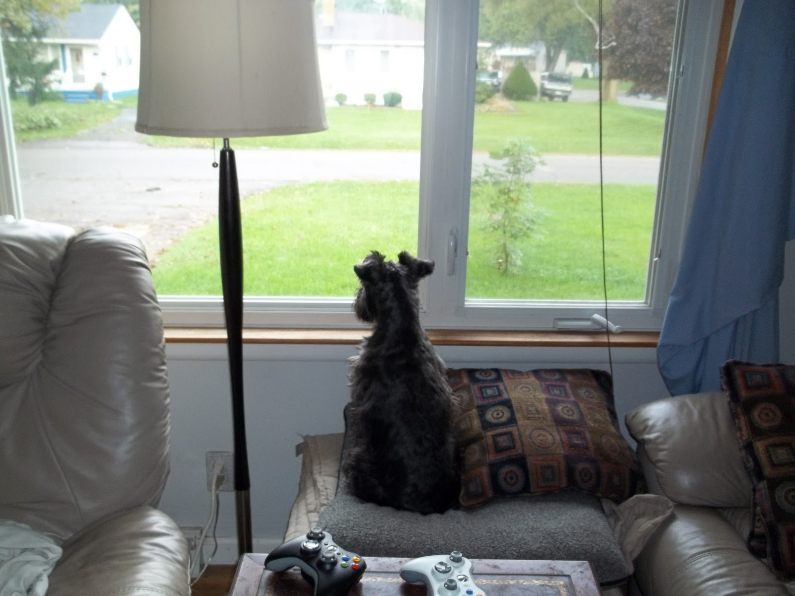 Window Seat With Dog Perch Covered Gray Cover And Cushion Decorated In Living Room