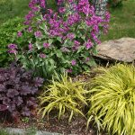 perennials for zone 7 with hakon grass spring for garden ideas