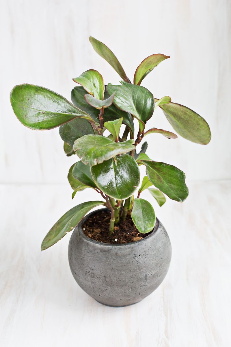 Adorable And Cute Unique Indoor Plant Design With Gray Rustic Pot On White Floor