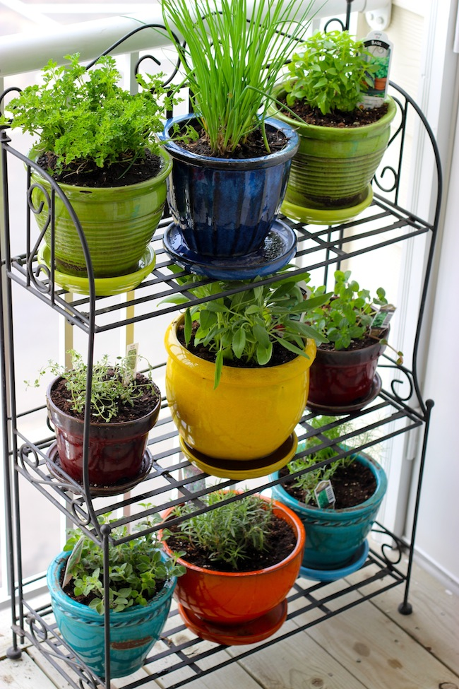 Colorful Apartment Herb Garden Design For Interior With Metal Racks In Yellor Green Blue Red And