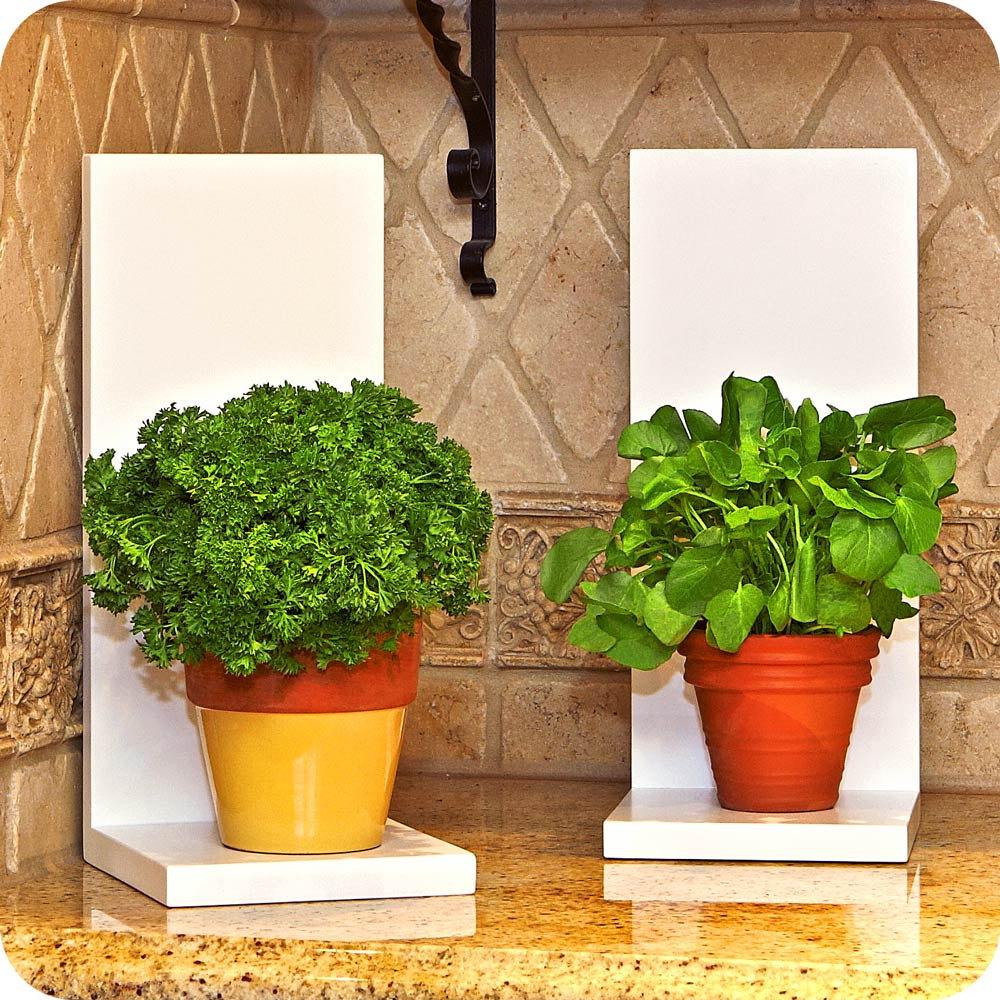 Unique indoor plants simple effort for eco friendly home - Indoor plants decoration ideas ...