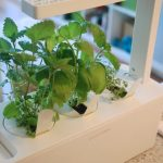 simple modern planter apartment herb garden idea in interior beneath glass wall with white tone